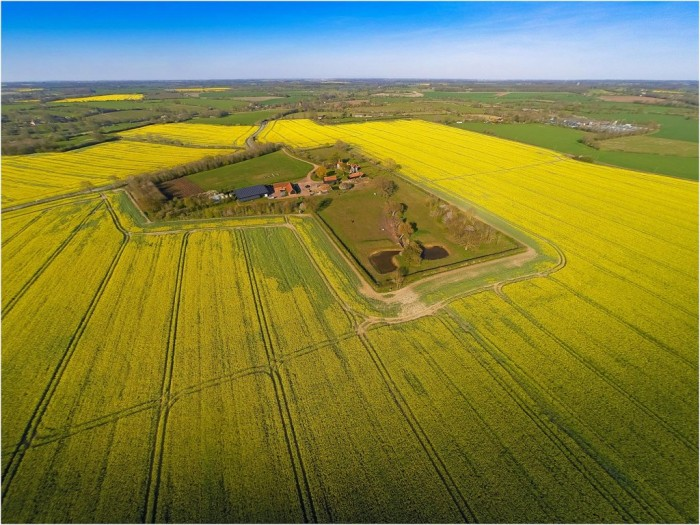 Hill Farm, Suffolk, Rapeseed Aerial View
